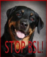 North East Rottweiler Rescue Referral Inc Home